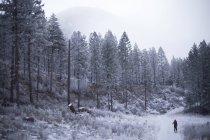 Uomo sci attraverso Rattlesnake montuosa vicino a Missoula, Montana. — Foto stock