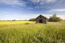 Старий відмовилися сарай в макусі поля, північна Британська Колумбія, Канада — стокове фото