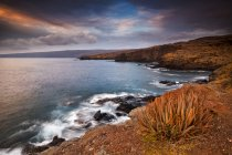Vista panoramica di aloe pianta, Kaumalapau Porto Costa, Lanai, Hawaii — Foto stock
