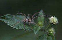 Aranha no cimo de uma folha verde em Xilitla, San Luis Potosi, México — Fotografia de Stock