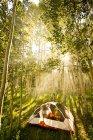 Tenda sole del mattino splende attraverso un boschetto di Aspen in Colorado, Yampa — Foto stock