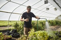 A Farmer Waters Plants In His Greenhouse — Stock Photo