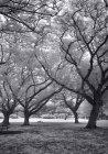 Дерева, здавалося б лицарські — стокове фото