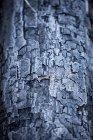 Beautiful nature photograph of tree bark, Hillsdale Meadows, Banff National Park, Alberta, Canada — Stock Photo