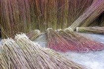 Крупним планом подання організував зібраних плетених в замороженому басейн — стокове фото