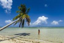 Женщина, ходить в море на пляже под кокосовой пальмы в Boipeba остров, Южная Баия, Бразилия — стоковое фото