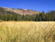 Herbeux paysage avec arbres et montagne dans la Sierra orientale près de Mammoth Lakes, Californie, é.-u. — Photo de stock