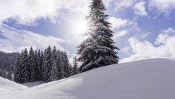 Luz do sol sobre as montanhas de Jura, imaginando um abeto isolado no primeiro plano e lotes de abetos vermelhos para trás em um céu azul com nuvens brancas no Cantão de Vaud, Suíça — Fotografia de Stock