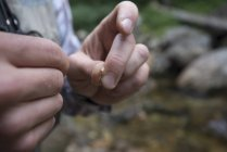 Person Hands Tying A Small Nymph While Fishing For Small Native Brook Trout — Stock Photo