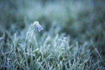 Фотографія гарна природа з крупним планом трави з морозу, Hillsdale полонини, Національний парк Банф, Альберта, Канада — стокове фото