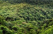 Malerische Aussicht des Regenwaldes in der Nähe von Monteverde, Costa Rica — Stockfoto