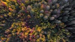 Пташиного польоту ліс восени з повним спектром осінніх квітів у кантоні Во, Швейцарія — стокове фото