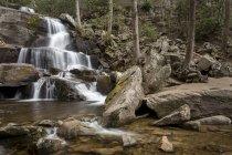 Национальный парк Грейт-Смоуки-Маунтинс — стоковое фото