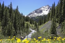 Colorado Mountain Creek Flowing Down In The San Juan National Forest — Stock Photo