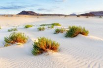 Scenic View Of Dunes Of Corralejo, Canary Islands, Spain — Stock Photo