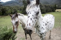 Close-up Of Horses In Marlborough Sounds, New Zealand — Stock Photo