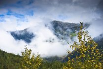 Снег покрывает вершину горы в Revelstoke, Британская Колумбия — стоковое фото