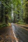 Viste panoramiche del Parco Nazionale Redwoods nel nord della California — Foto stock