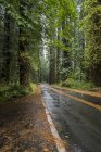 Scenic views of the Redwoods National Park in Northern California — Stock Photo