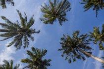 Blick auf Palmen, Tonsai Beach, Krabi, Thailand — Stockfoto