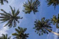 Olhando para o palmeiras na Praia Tonsai, Krabi, Tailândia — Fotografia de Stock