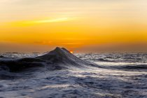 Ocean wave captured against a golden rising sun in Hawaii — Stock Photo