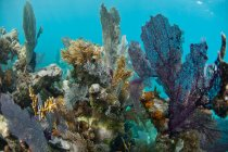 Different beautiful corals under water — Stock Photo