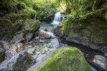 Beautiful Atlantic Rainforest river with crystal clear water, Serrinha do Alambari, Rio de Janeiro State, Brazil — Stock Photo