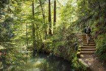 Человек, походы на катаракты водопад след в пейзаж с поток и лес, Маунт Тамалпаис водоразделом, Марин Каунти, Калифорния, США — стоковое фото