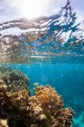 Split-level view of sky above and reef with coral underwater, West End, West Bay, Roatan, Honduras — Stock Photo