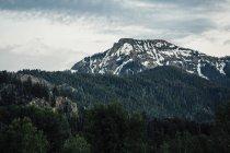 Облака над зеленым лесом и саммит горы Flattop, Колорадо, США — стоковое фото