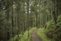 Forest with trail in sanctuary of fireflies in Santa Clara, Tlaxcala, Mexico — Stock Photo