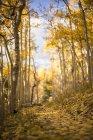 Caduti dell'aspen foglie copertina il sentiero a picco del Wheeler nel Great Basin National Park — Foto stock