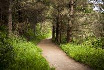 Пішохідні стежки стежка у лісі, Марін Каунті, штат Каліфорнія, США — стокове фото