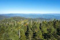 EUA, Carolina do Norte, Great Smoky Mountains National Park, Clingmans Dome, fronteira entre a Carolina do Norte e Tennessee — Fotografia de Stock
