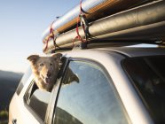 Photograph with dog looking out of side window of car, McCall, Idaho, USA — Stock Photo