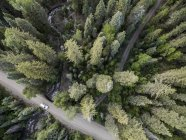 View from above of San Juan National Forest and dirt road, Pagosa Springs, Colorado, USA — Stock Photo