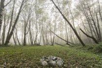 Schöne Landschaft des Waldes mit Nebel und Felsen, König Range National Conservation Area, Kalifornien, Usa — Stockfoto
