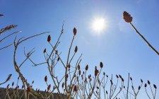 Сумах Сонячний блакитному небі, велика, штат Вермонт, США — стокове фото