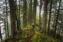 Hombre mirando árboles mientras camina balas en Mossy Ridge - foto de stock