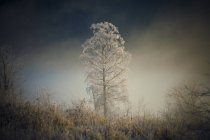 Tree Covered With Hoar Frost In Pitt Meadows, British Columbia — Stock Photo