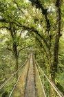 Malerische Aussicht auf Costa Rica Canopy Walk — Stockfoto