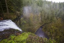 Silver Falls State Park — Stock Photo