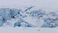 Eis und wilden Eisbären — Stockfoto