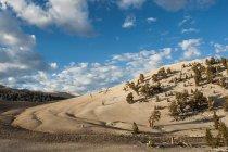 Pinède de pins à cônes épineux dans les montagnes blanches — Photo de stock