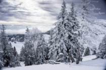 View Of Trees Covered With Snow In Switzerland — Stock Photo