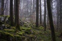 Лес с Мосс покрыты землей в Шартрез регионального природного парка во Франции — стоковое фото