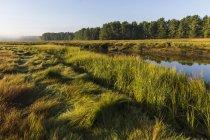 Marais salants le long de la rivière York au cœur du ruisseau de l'éperlan à York, Maine — Photo de stock