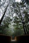 Промінь світла є pictured крізь туман і попадання міст в Національний парк Редвуд, Каліфорнія — стокове фото