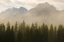 Genadier гірського хребта, так і ранковий туман вище ялина дерев на Molas Pass, Сан-Хуан National Forest, Сільвертону, Колорадо — стокове фото